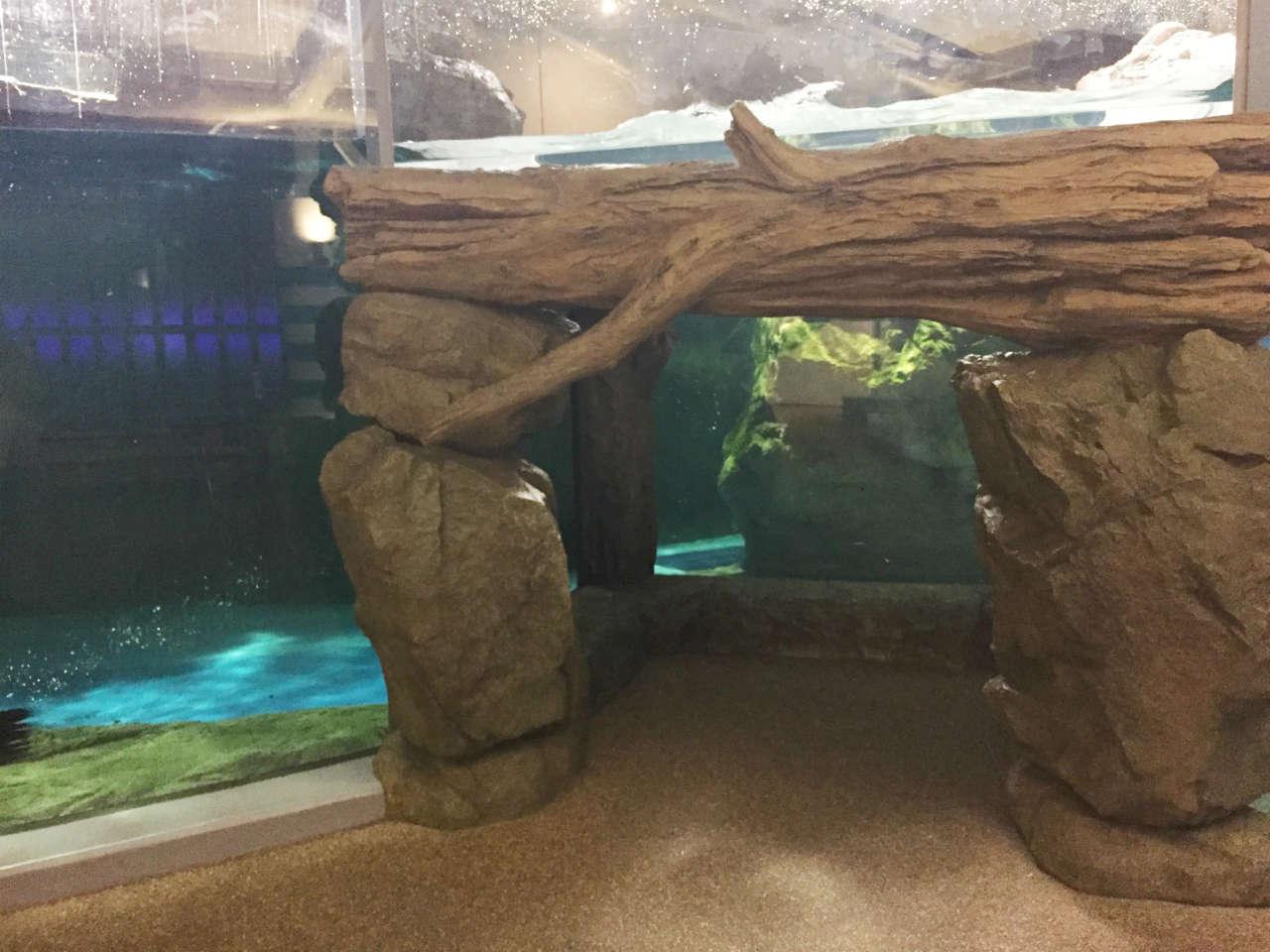 kyoto-aquarium-ashika