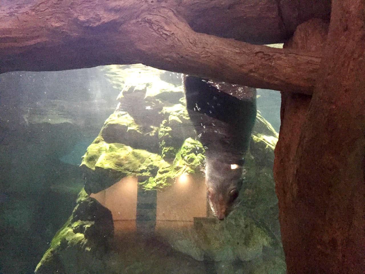 kyoto-aquarium-ashika2
