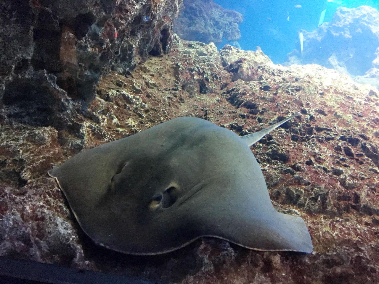kyoto-aquarium-ei