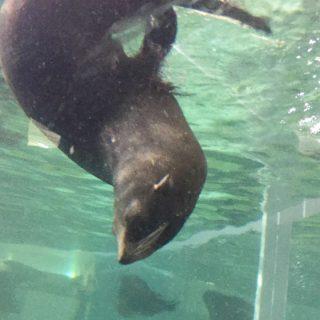 【18切符旅10】ノープラン旅!急遽、京都水族館へ