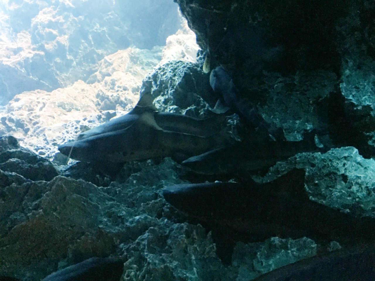 kyoto-aquarium-shark