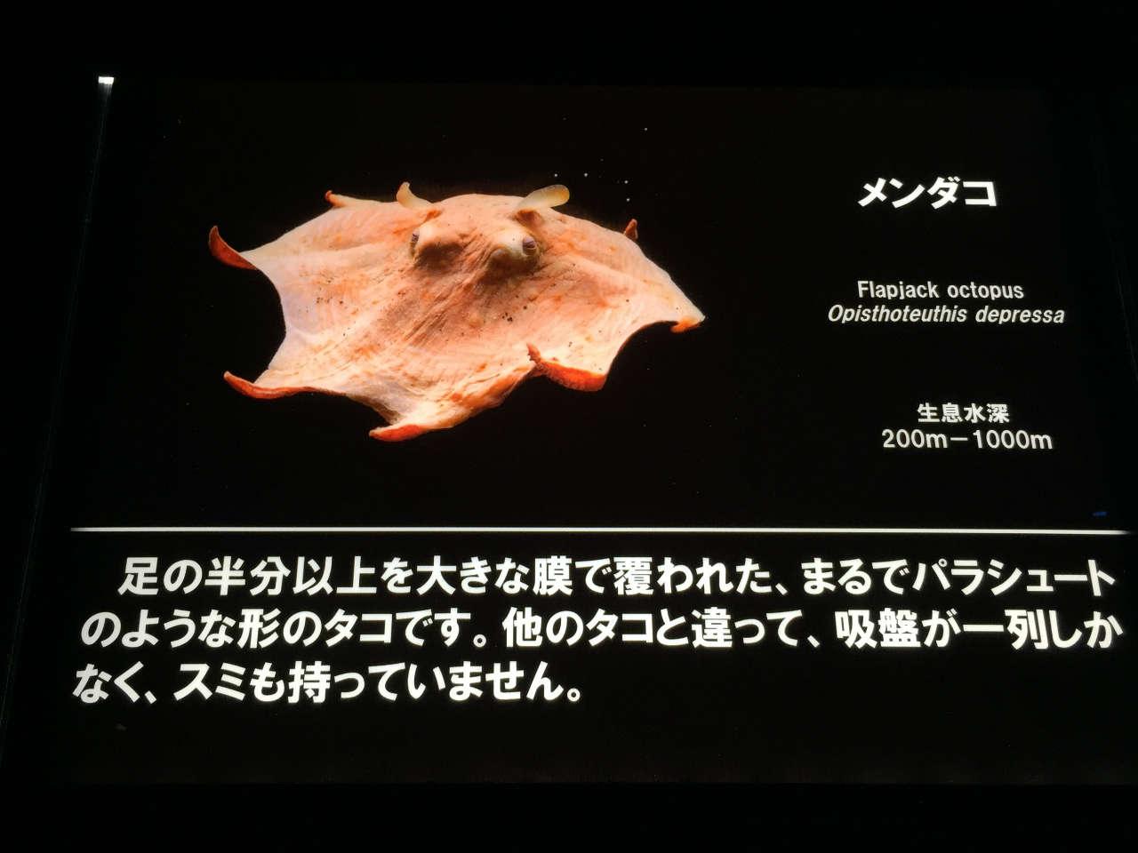 numazu_suizokukan-mendako