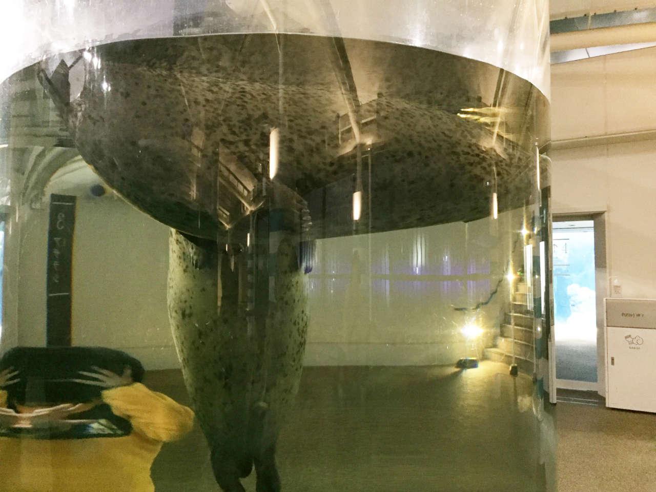 kyoto-aquarium-azarashi