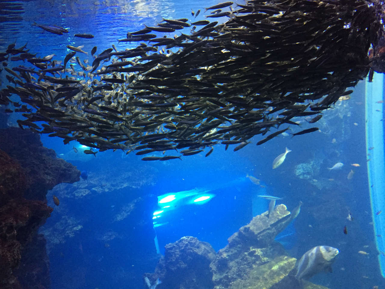 kyoto-aquarium-gyogun