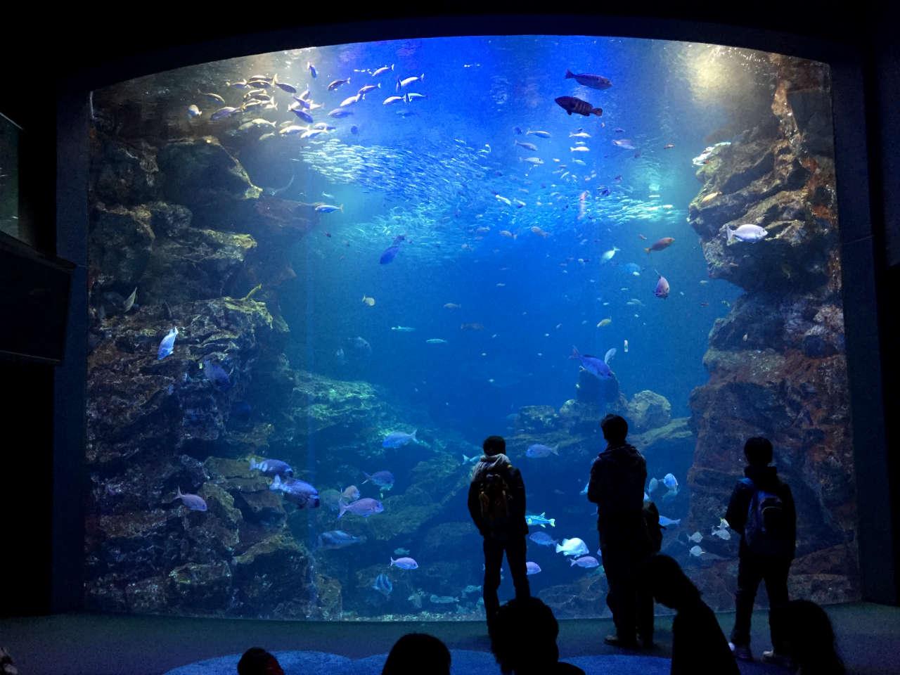 kyoto-aquarium-main