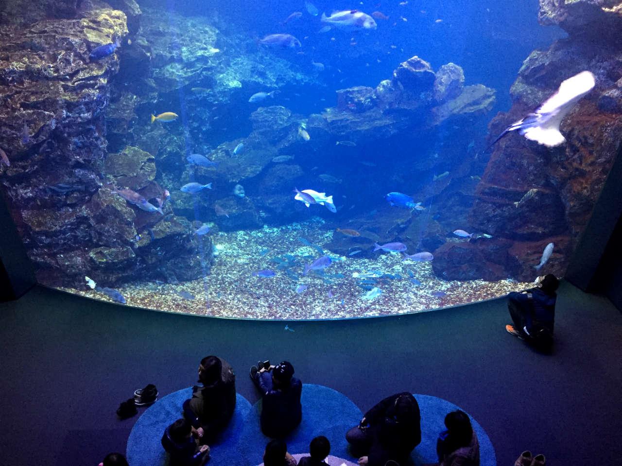 kyoto-aquarium-main2