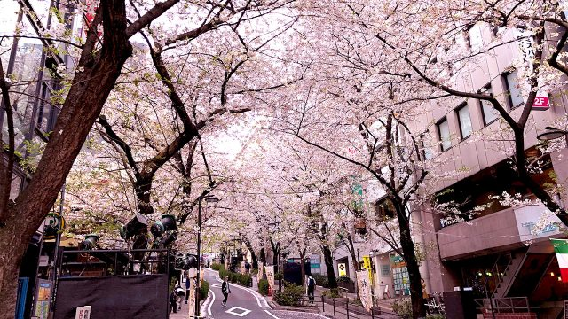 2018年3月29日渋谷ルイードK2にアマオト初出演!桜散る時期に気持ちよくライブしてきました!
