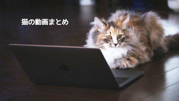 人間っぽい動きをしたり予想外の動きをする猫など、可愛い猫の動画まとめ