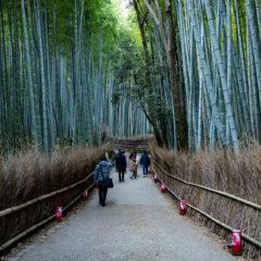 京都の嵐山付近を散策するなら早朝がおすすめ!竹林・車折神社を散歩してきました!